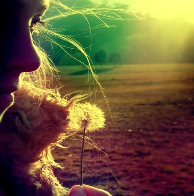 beautiful,dandelion,photography,sunset,portrait,field-229869d285a95e8dcecb376ad2932300_h